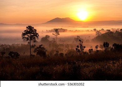 sunrise in savanah meadow in the mist with mountain background.