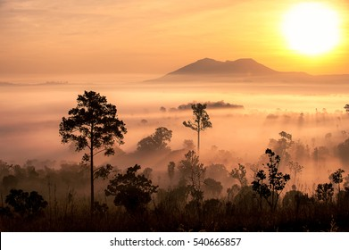 sunrise in savanna meadow in the mist with mountain background.