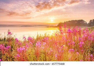 Sunrise scenery over Northern sea in Sweden, coast line with field flowers, green grass at foreground, epic sunrise sky in background.