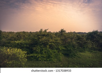 Sunrise scenery plain landscape in Yala national park reserve in Sri Lanka in orange pink purple colors