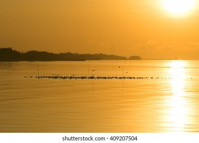 Sunrise at sea with bird(seagulls). (Golden sky moment)
