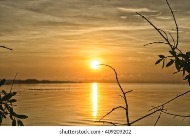 Sunrise at sea with bird(seagulls) and tree branches (foreground).  (Golden sky moment)