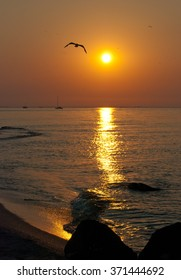 sunrise at the sea with flying bird
