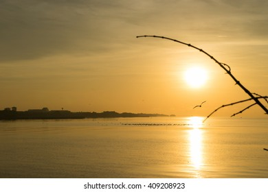 Sunrise at sea with flying bird(seagulls) and tree branch (foreground).  (Golden sky moment)