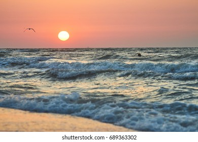 Sunrise at the sea and a gull over the wave. seascape