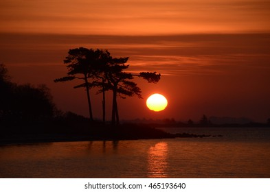 Sunrise at the sea, the sun rises behind some remarkable Austiran Pine trees.