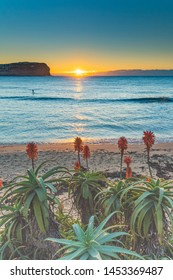 Sunrise Seascape and Aloe Vera in Flower - MacMasters Beach on the Central Coast, NSW, Australia.