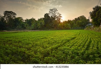 Sunrise at the Sesame fields