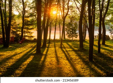 A sunrise shines across a misty lake through trees in a park like setting casting long shadows over the grass in the foreground.