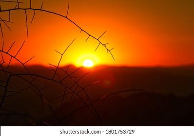 Sunrise shining through desert plantlife