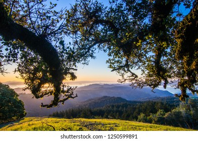 Sunrise shot of San Francisco through oak trees from Mt. Tam