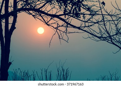 sunrise with silhouette branch  in a vintage light noise added