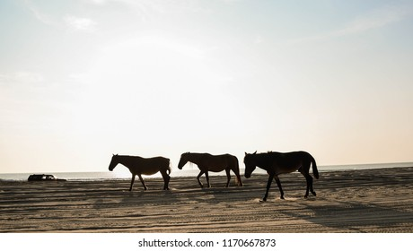 Sunrise silhouette of the famous wild horses of Carova Beach, N.C., on the 4 Wheel Drive Beach, with an SUV passing in the background.