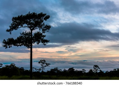 sunrise with silhouette pine trees with beautiful clouds and Heavy fog Floating above the mountains in the morning.