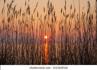 sunrise silhouette through shoreline reeds chesapeake bay calvert county southern maryland usa