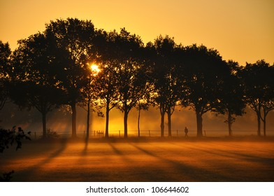 Sunrise Silhouettes of trees and a man on the edge of the misty fields at sunrise