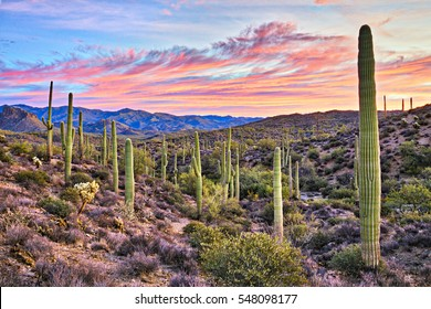 Sunrise in Sonoran Desert near Phoenix, Arizona.