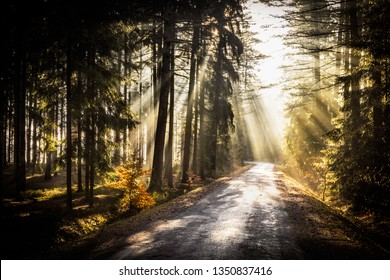Sunrise spring rays peaking through forest foliage and road leading through forest. Amazing warm early spring morning scene. Peaceful, magical and quiet natural scene.