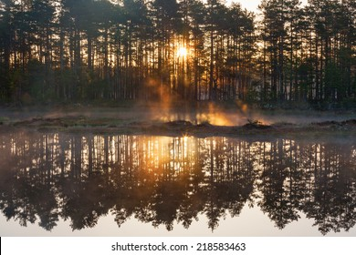 Sunrise with sunbeams through the forest by the lake