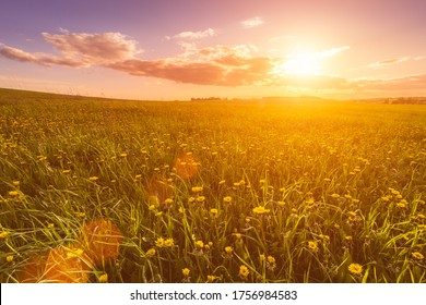 Sunrise or sunset on a field covered with young green grass and yellow flowering dandelions, a hill in the background and a cloudy sky with sunbeams cutting through the clouds.