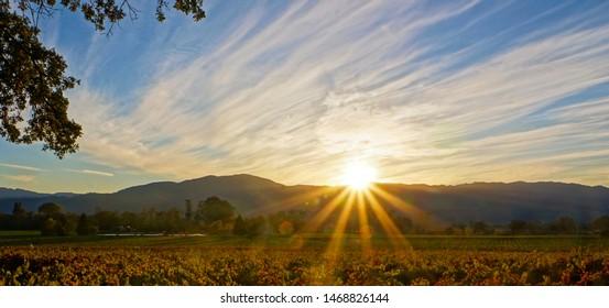 Sunrise sunset over Napa Valley Vineyard