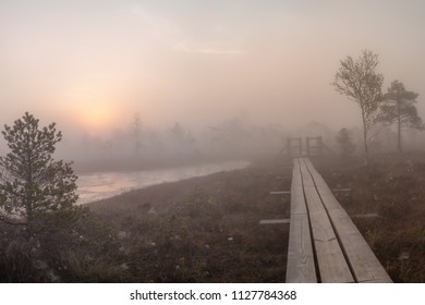 Sunrise at swamp with small pine trees covered in early morning. Kemeri national park at sunrise, Latvia.