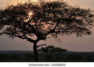 Sunrise at Tarangire National Park in Tanzania