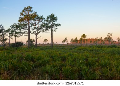 Sunrise at Three Lakes Wildlife Management Area south of Orlando, Florida. This rare ecosystem is home to threatened species such as the Longleaf Pine, Saw Palmetto, and the Red Cockaded Woodpecker.