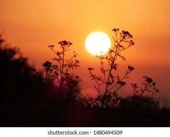 Sunrise at today morning. Silhouette photography.