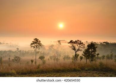 Sunrise at Tung Salang Luang National Park in Phetchabun