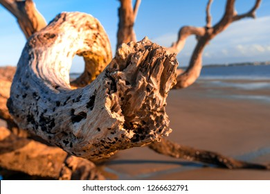 Sunrise view of Driftwood Beach in Jekyll Island, Georgia. Driftwood is popular with its long beach full of dead tree roots along ocean.