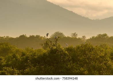 Sunrise view with a forest and mountain