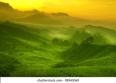 Sunrise view of tea plantation landscape at Cameron Highland, Malaysia.