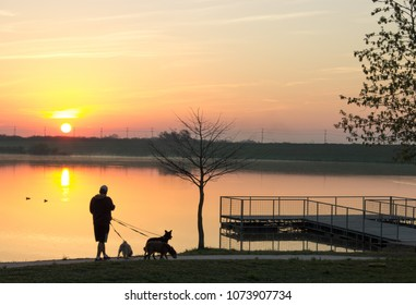 Sunrise walk with dogs