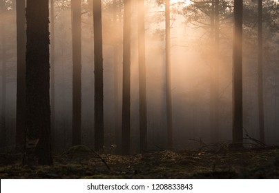 sunrise and warm sunlight in wild forrest