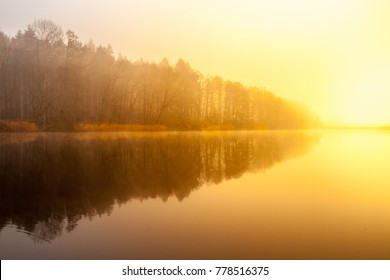 Sunrise at the water. Trees reflection in the pond on foggy morning.