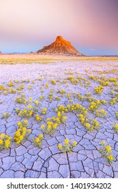 Sunrise with wildflowers in the Utah Desert, USA.
