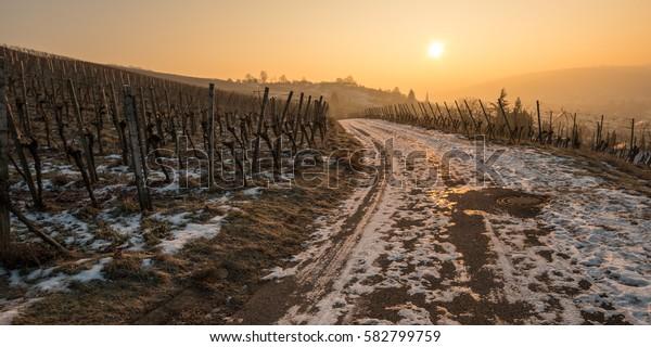Sunrise in winter in a vineyard with snow and ice