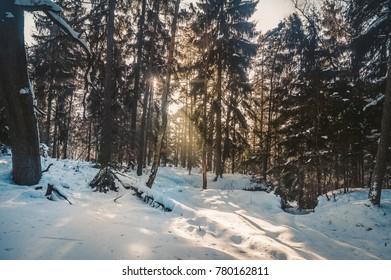 Sunrise in winter in the woods