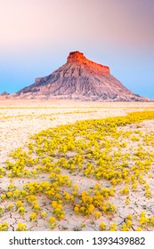 Sunrise with yellow wildflowers in the Utah desert, USA.