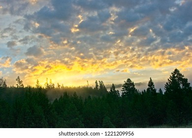 Sunrise in Yellowstone Park as steam rises from a geyser area behind the trees..