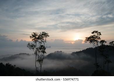 sunrise-hill-tree