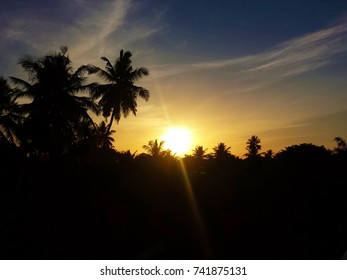 sunrising from dense trees