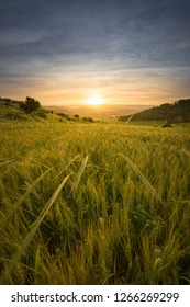Sunrising over a field of ripening wheat
