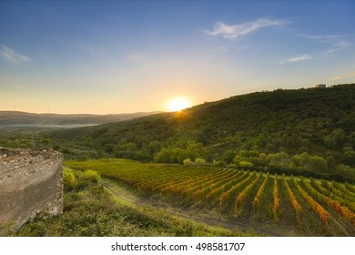 sunrive over aglianico vineyard in southern italy in basilicata region