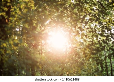the sun's rays make their way through the foliage