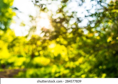 The sun's rays make their way through the branches of a tree. Defocused image