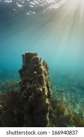 Sun's rays point to giant tube sponge growing on the coral reef off coast of Belize
