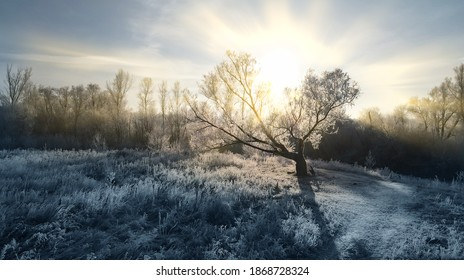 The sun's rays shine through the branches covered with snow