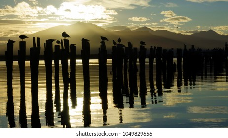 Sunset in an abandoned dock, located in the city of Puerto Natales, Patagonia Chile. You can see the shape of some birds flying or standing at the sticks. The sea seems to be made of gold